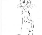 Coloriage dessin  Marmotte 8