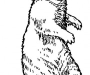 Coloriage et dessins gratuit Marmotte au crayon à imprimer