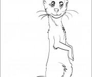 Coloriage et dessins gratuit Marmotte couleur à imprimer