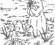 Coloriage et dessins gratuit Marmotte et ses petits à imprimer