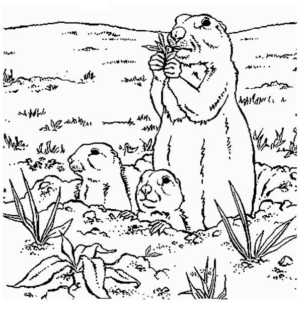 Coloriage marmotte et ses petits dessin gratuit imprimer - Dessiner une marmotte ...