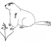 Coloriage et dessins gratuit Marmotte facile à imprimer