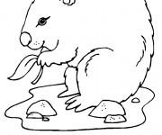 Coloriage et dessins gratuit Marmotte mange à imprimer