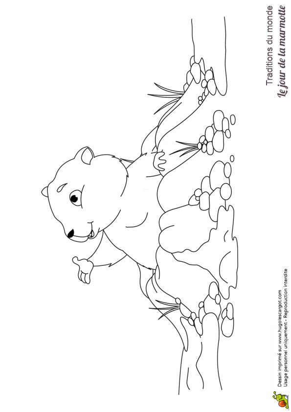 Coloriage Marmotte Montagne Dessin Gratuit à Imprimer