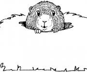 Coloriage Marmotte sort sa tête