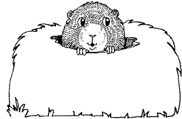 Coloriage marmotte sort sa t te dessin gratuit imprimer - Dessiner une marmotte ...
