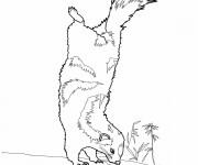 Coloriage dessin  Moufette 10