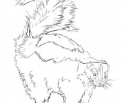 Coloriage et dessins gratuit Moufette au crayon à imprimer
