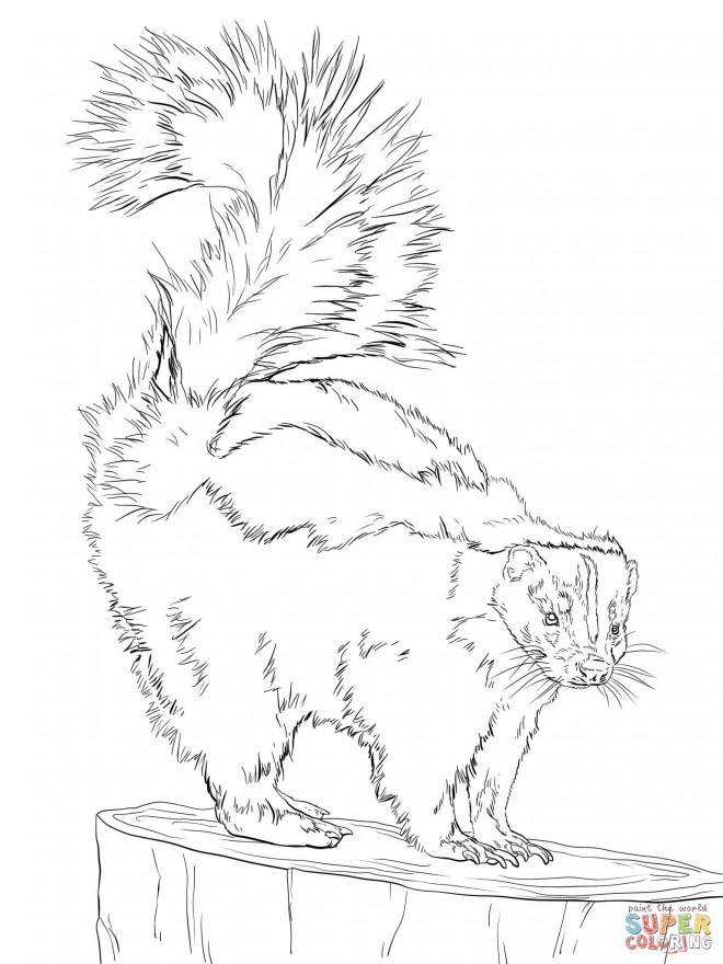 Coloriage et dessins gratuits Moufette au crayon à imprimer