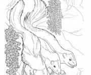 Coloriage et dessins gratuit Moufettes réalistes à imprimer