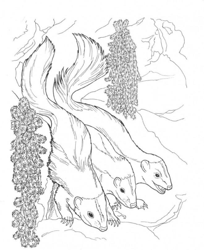 Coloriage et dessins gratuits Moufettes réalistes à imprimer