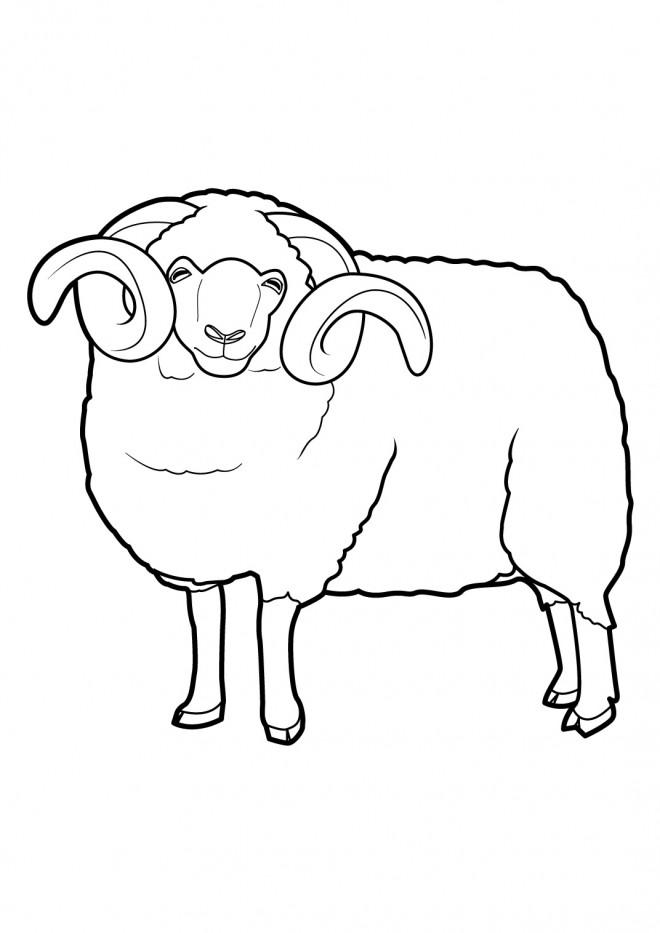 Coloriage et dessins gratuits Gros Mouton à imprimer