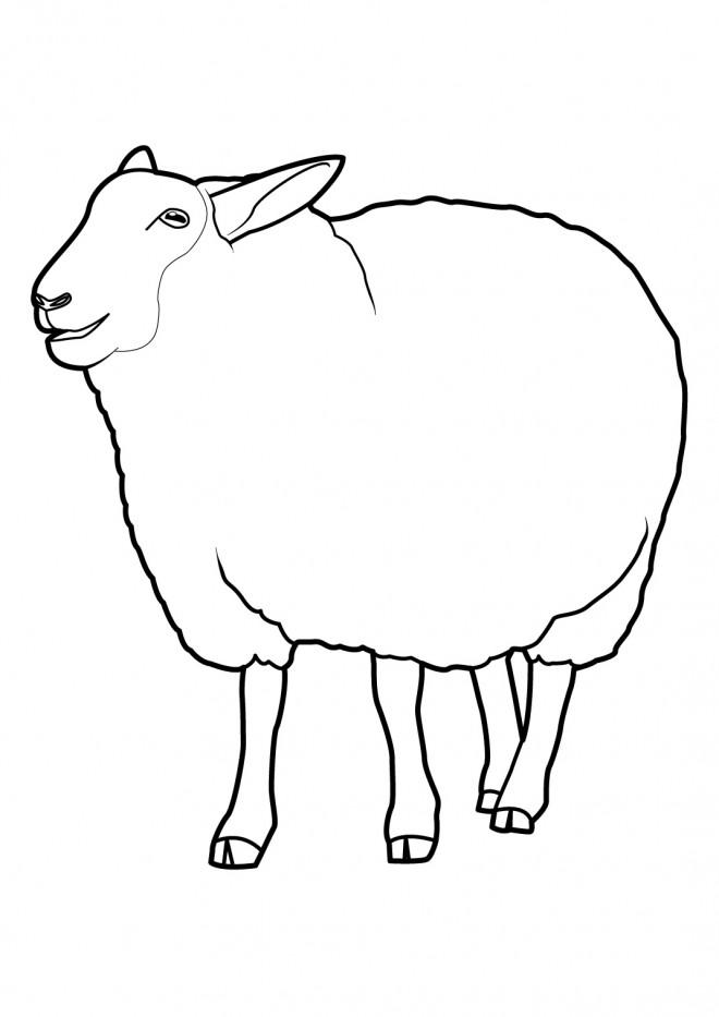 Coloriage et dessins gratuits Le mouton bêle à imprimer