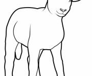 Coloriage dessin  Mouton 16