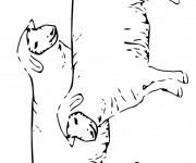 Coloriage dessin  Mouton 17