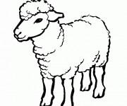 Coloriage dessin  Mouton 3