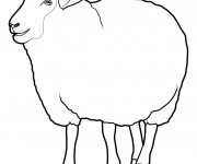 Coloriage dessin  Mouton 4