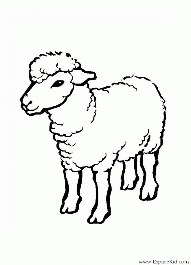 Coloriage mouton couleur dessin gratuit imprimer - Coloriage agneau ...