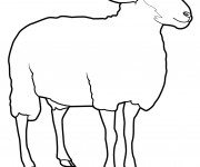 Coloriage Mouton facile