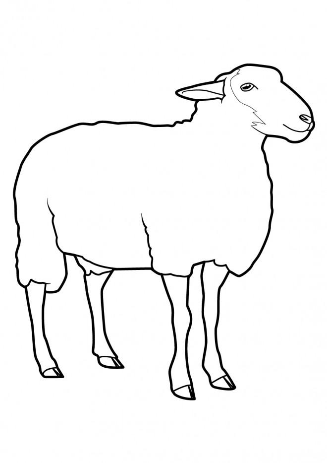 Coloriage mouton facile dessin gratuit imprimer - Mouton en dessin ...