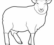 Coloriage Mouton vecteur