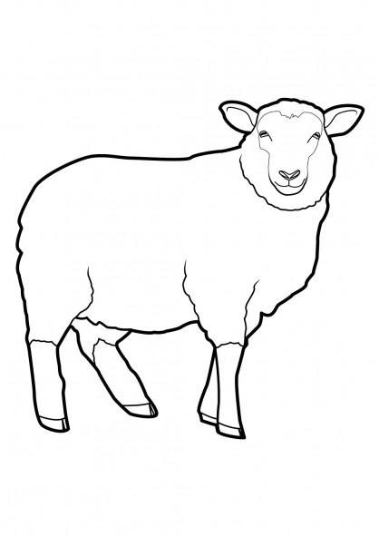 Coloriage Mouton Vecteur Dessin Gratuit A Imprimer