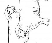 Coloriage Moutons au crayon