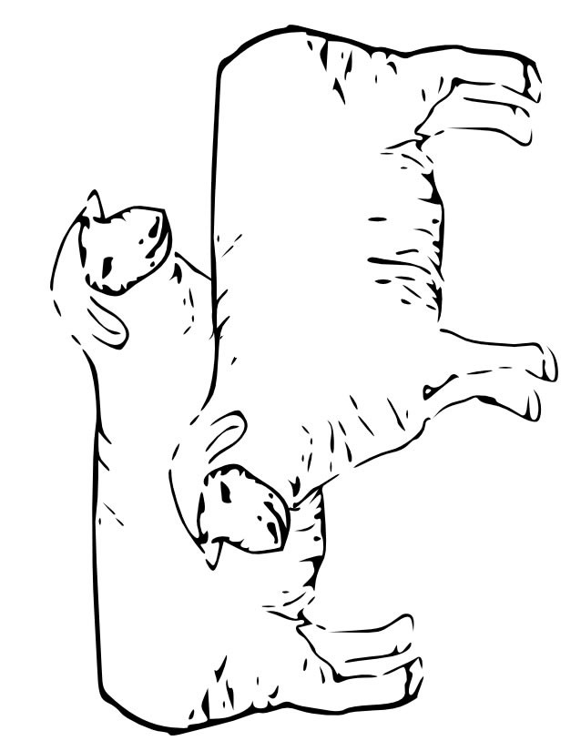 Coloriage moutons au crayon dessin gratuit imprimer - Dessin mouton rigolo ...