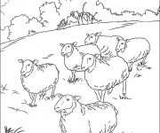 Coloriage Moutons en plein air