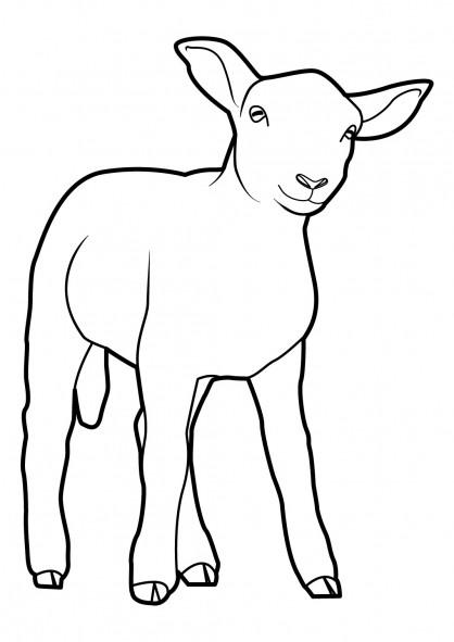 Coloriage et dessins gratuits Petit Mouton à imprimer