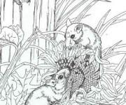 Coloriage dessin  Mulot 1