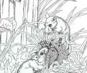 Coloriage et dessins gratuit Mulots réalistes à imprimer