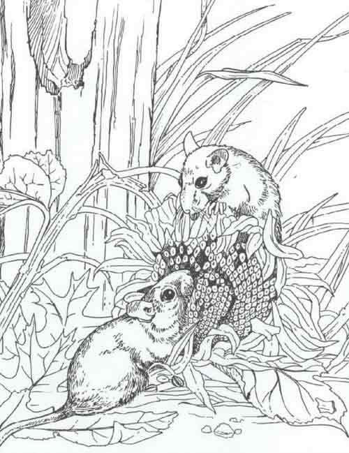 Coloriage et dessins gratuits Mulots réalistes à imprimer