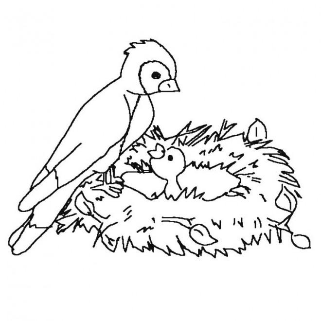 Coloriage maman oiseau et son b b dessin gratuit imprimer - Dessin d oiseau a imprimer ...