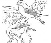 Coloriage Oiseau au crayon