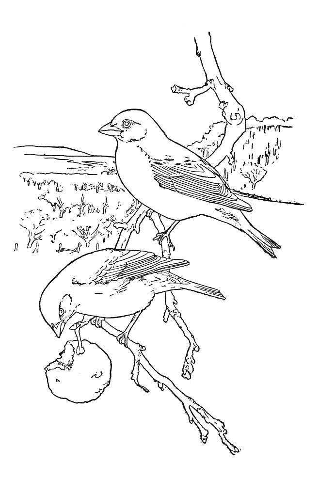 Coloriage et dessins gratuits Oiseau au crayon à imprimer