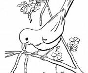 Coloriage Oiseau en chantant