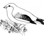 Coloriage Oiseau en noir et blanc