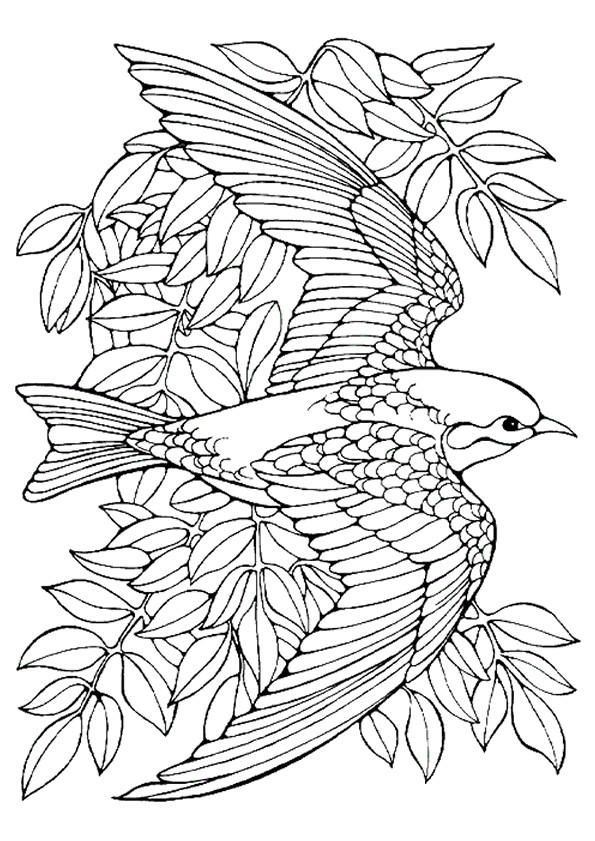 Coloriage oiseau en vol dessin gratuit imprimer - Dessin oiseau en vol ...