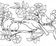 Coloriage et dessins gratuit Oiseau et ses petits à imprimer