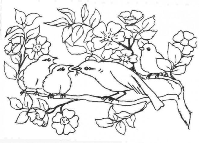 Coloriage et dessins gratuits Oiseau et ses petits à imprimer