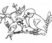 Coloriage Oiseau et son bébé sur l'arbre