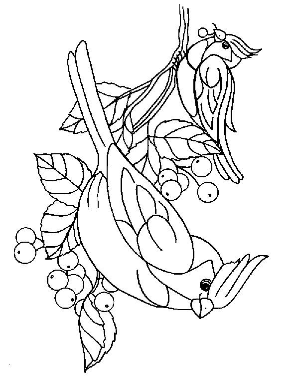 Coloriage et dessins gratuits Oiseaux adorables à imprimer