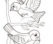 Coloriage et dessins gratuit Oiseaux exotiques à imprimer