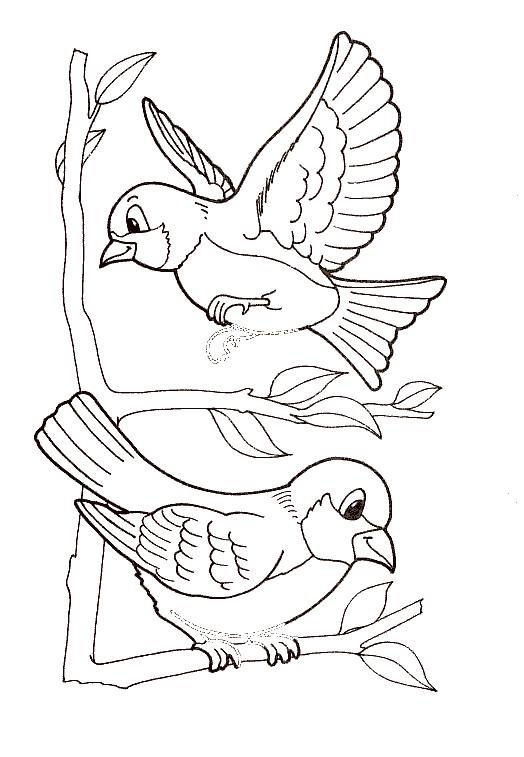 Coloriage Oiseaux Exotiques Dessin Gratuit à Imprimer
