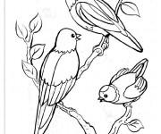 Coloriage Oiseaux sur l'arbre