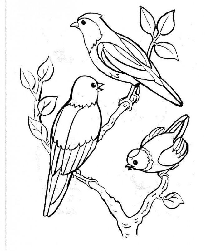 Coloriage Oiseau Sur Arbre.Coloriage Oiseaux Sur L Arbre Dessin Gratuit A Imprimer