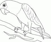 Coloriage dessin  Perroquet