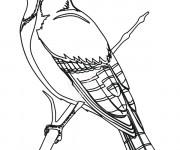 Coloriage et dessins gratuit Un beau Oiseau à imprimer