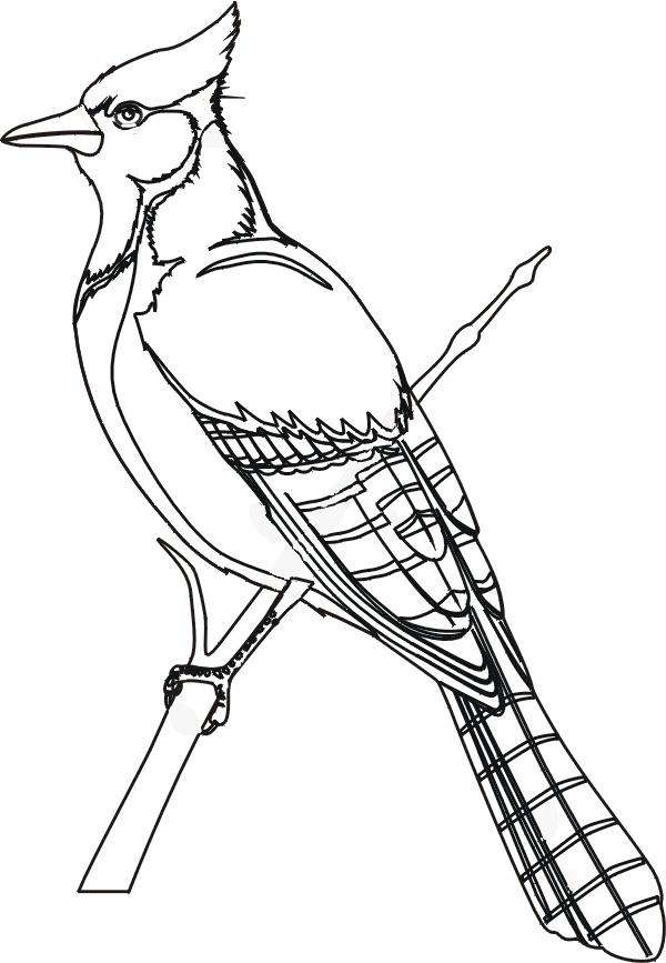 Coloriage et dessins gratuits Un beau Oiseau à imprimer